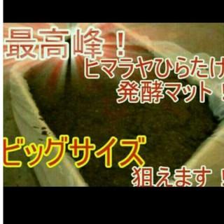 送料無料!20リットル カブトムシ幼虫の餌 ヒマラヤひらたけ発酵マット 巨大化!(虫類)