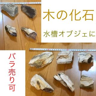 木の化石 10個セット ★ 木化石 珪化木 鑑賞石 水石 アクアリウム(虫類)