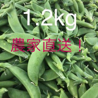 スナップえんどう 1.2kg(野菜)