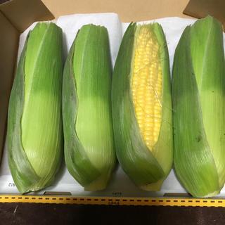 スイートコーン   ゴールドラッシュ   4本  沖縄県産(野菜)