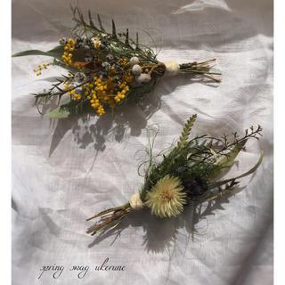 ミモザとフィリカの春を呼び込む 小ぶりで可愛らしいスワッグ ドライフラワー(ドライフラワー)
