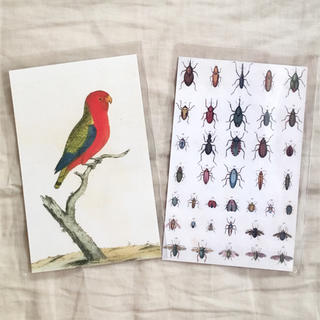 アッシュペーフランス(H.P.FRANCE)のJohn Derian ジョンデリアン ポストカード 2枚セット⑧ insect(切手/官製はがき)