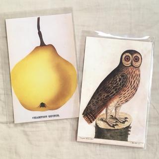 アッシュペーフランス(H.P.FRANCE)のJohn Derian ジョンデリアン ポストカード 2枚セット ⑪ フクロウ(切手/官製はがき)
