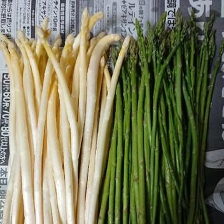 (増量!)佐賀県産極細ホワイト&グリーンアスパラ1.5キロ(訳あり)(野菜)