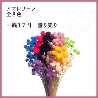 【1本17円】アマレリーノ 全8色 量り売り(ドライフラワー)
