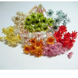 スターフラワーブロッサム80本④花材(ドライフラワー)