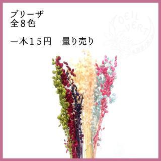 【1本15円】ブリーザ 全8色 量り売り(ドライフラワー)