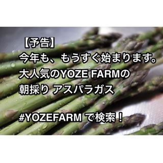 ついに、始まりましたっ!!/朝採り那須野が原産 アスパラガス(野菜)
