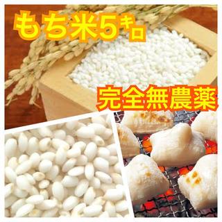 ⭐アウトレット・完全無農薬もち米 5㌔⭐(米/穀物)