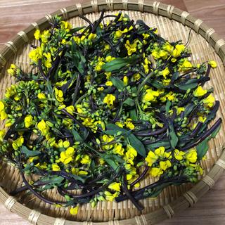 【期間限定】紅菜苔(野菜)
