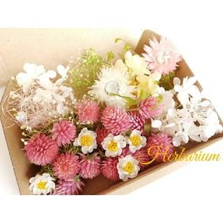 ハーバリウム花材セット ~春のお花畑~ ドライフラワー(ドライフラワー)