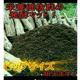 送料無料!カブトムシ幼虫の餌!栄養価抜群なので大きくなります!クワガタにも使える(虫類)