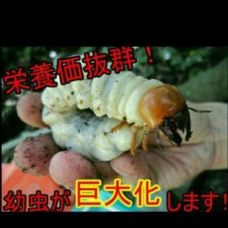 ヒマラヤひらたけ発酵マット!クワガタ、カブトムシに使えるコンプリートマット!(虫類)