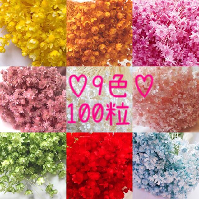 9色100粒mix/スターフラワーミニ/ドライフラワー ハンドメイドのフラワー/ガーデン(ドライフラワー)の商品写真