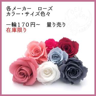 【1輪170円~】各メーカーローズ カラーサイズ色々 量り売り(在庫限り)(プリザーブドフラワー)