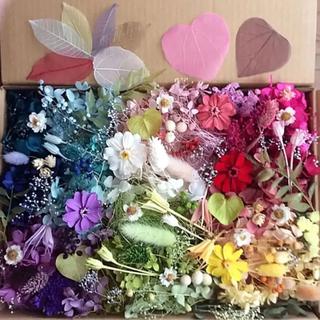 ジニアお花畑セット 花材 アソートボックス(プリザーブドフラワー)