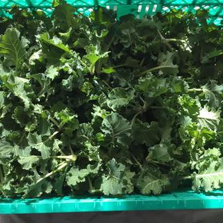 プチヴェール20袋(野菜)
