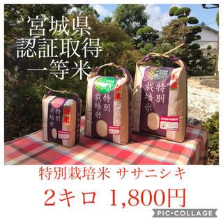 ぽぽちゃん様専用☆宮城県産ササニシキ2キロ(米/穀物)