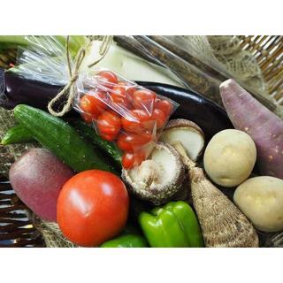 農家直売 野菜詰合せ 60サイズ 送料込み 熊本産(野菜)