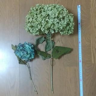 【ぷりん様専用】天然紫陽花 アナベル ドライフラワー 黄緑 特大 1本(ドライフラワー)