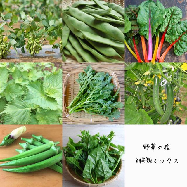 みっちゃん様専用 野菜の種 食品/飲料/酒の食品(野菜)の商品写真