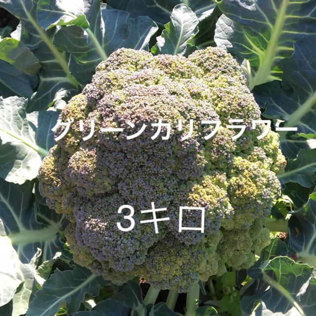 グリーンカリフラワー 食品/飲料/酒の食品(野菜)の商品写真
