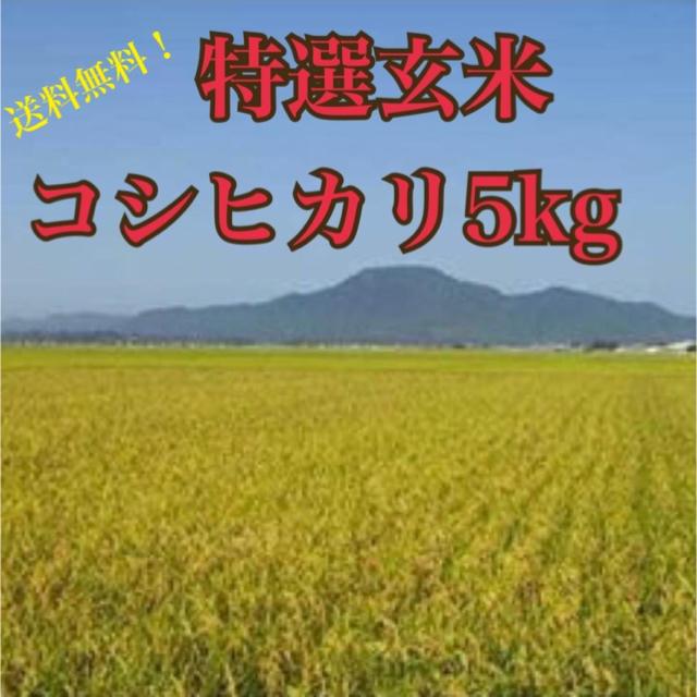自家製米コシヒカリ5キロ 食品/飲料/酒の食品(米/穀物)の商品写真