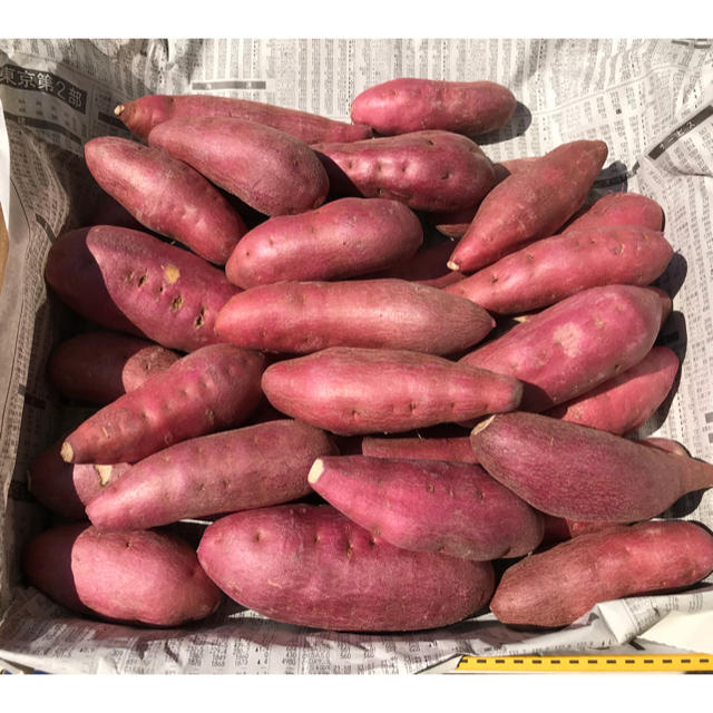 鳴門金時(なると金時)小さいお芋 送料無料 食品/飲料/酒の食品(野菜)の商品写真