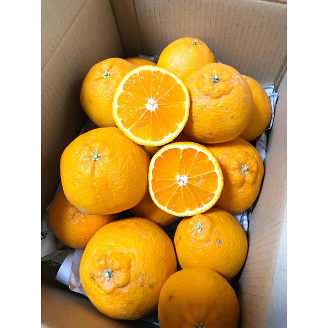 佐賀県太良産デコポン4.5kg 食品/飲料/酒の食品(フルーツ)の商品写真