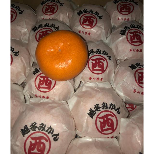 越冬みかん 食品/飲料/酒の食品(フルーツ)の商品写真