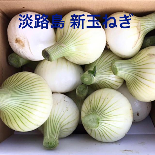 7611のん様用 淡路島 新玉ねぎ スーパーアップ 3kg (60サイズ) 食品/飲料/酒の食品(野菜)の商品写真