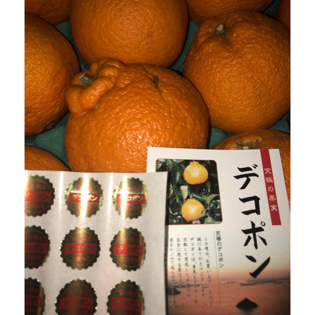 デコポン 食品/飲料/酒の食品(フルーツ)の商品写真