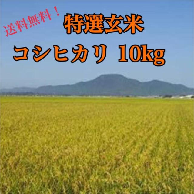 自家製米コシヒカリ10キロ 食品/飲料/酒の食品(米/穀物)の商品写真