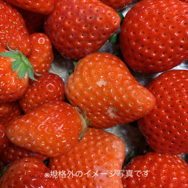 規格内、外詰合せ2kg●さがほのか苺●いちごイチゴ 食品/飲料/酒の食品(フルーツ)の商品写真