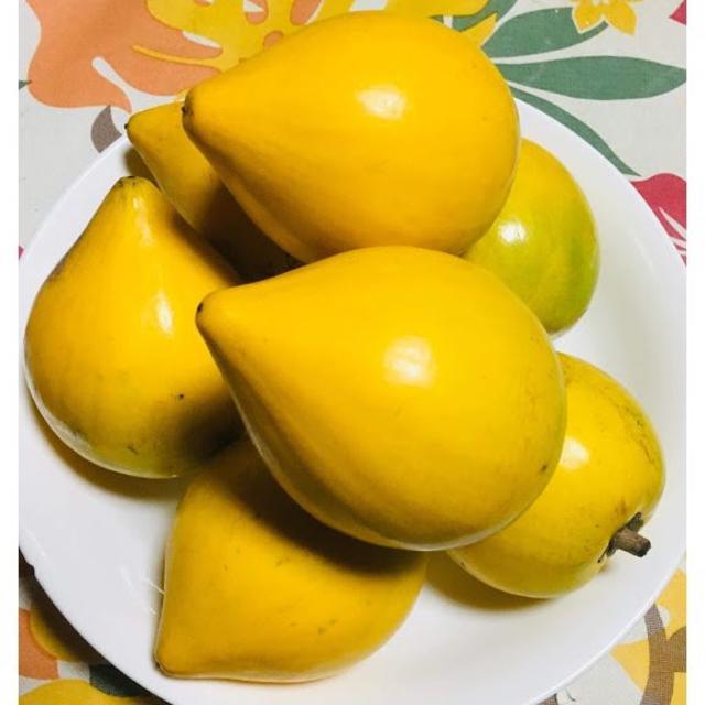 希少な沖縄産エッグフルーツ カニステル 1kg 食品/飲料/酒の食品(フルーツ)の商品写真