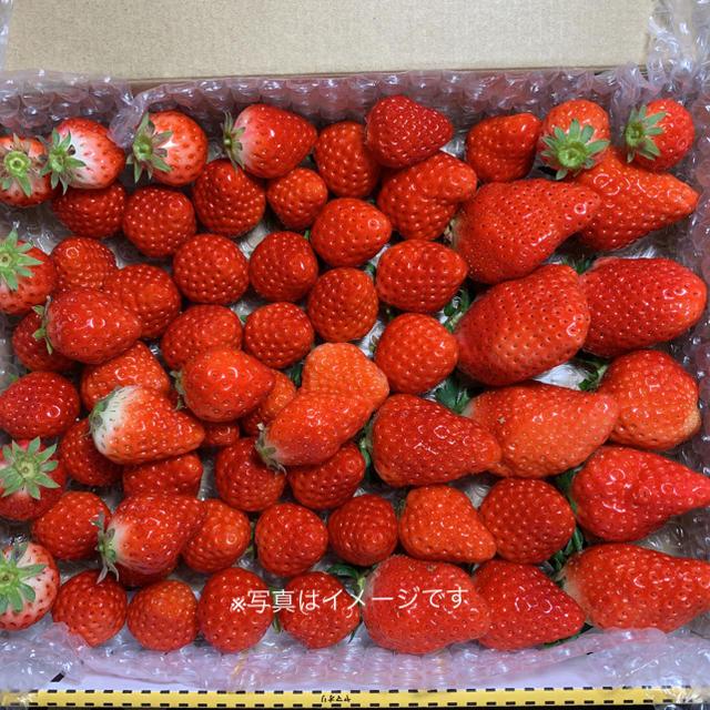 規格内、外詰合せ700g●さがほのか苺●いちご イチゴ 食品/飲料/酒の食品(フルーツ)の商品写真