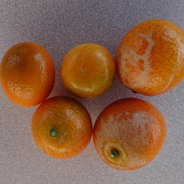 ラストセール-1‼️  訳あり「完熟きんかん」傷あり M品 3キロ段ボール 食品/飲料/酒の食品(フルーツ)の商品写真