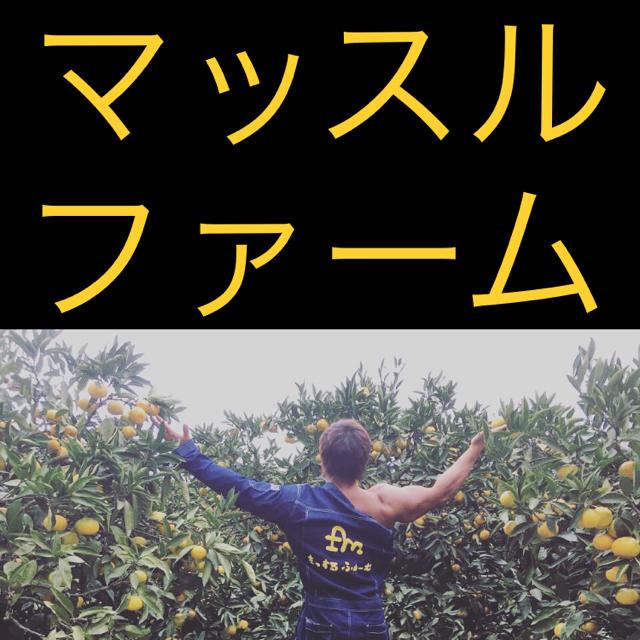 """""""唐津産""""デコポン 10kg ワケあり 食品/飲料/酒の食品(フルーツ)の商品写真"""