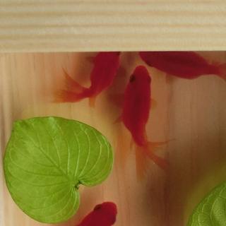 アクリルアート  「扇」こだわりの純日本製 琉金 プリザーブドフラワー(置物)