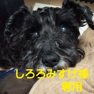 ハルタ(HARUTA)のタッセルローファー🎶HARUTA(未使用:美品)(ローファー/革靴)