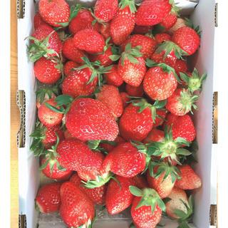 最終値下げ いちご やよいひめ 大小バラ規格外品 1.5キロ (フルーツ)