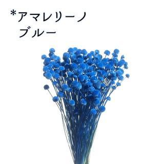 アマレリーノ ブルー 10本(ドライフラワー)