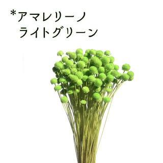 アマレリーノ ライトグリーン 10本(ドライフラワー)