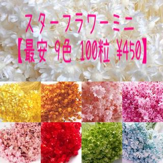 9色100粒/スターフラワーミニ/ドライフラワー(ドライフラワー)