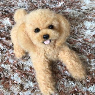 羊毛フェルト  トイプードル【アプリコット】犬(ぬいぐるみ)