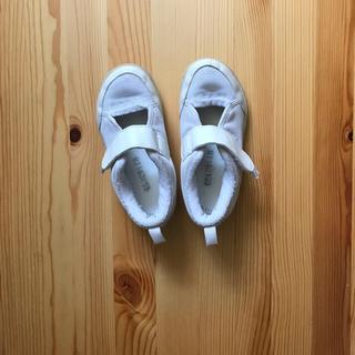 アシックス 上靴 上履き 16.5(スクールシューズ/上履き)