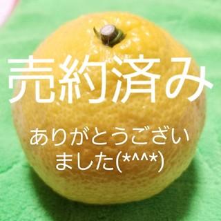 ワンド型ホワイトセージ【カリフォルニア産】(お香/香炉)
