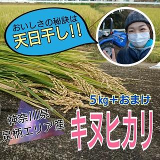 【神奈川足柄エリア産】米 キヌヒカリ 5kg+1合おまけ!(米/穀物)