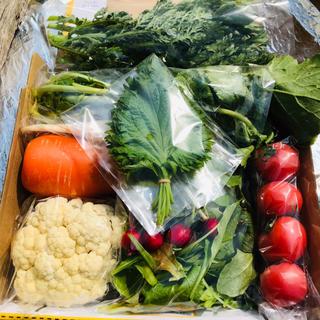 農家直送 野菜詰め合わせ コンパクトBOX