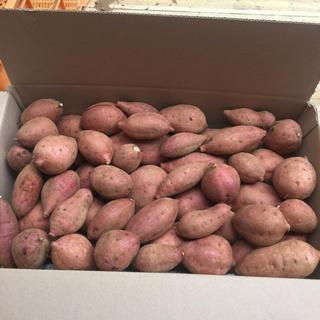 これでおしまい‼️無農薬 ‼️安納紅5キロ 種子島産‼️